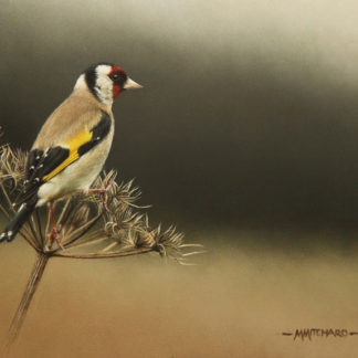 Perching goldfinch, acrylic.