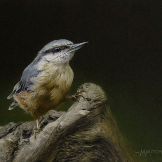 Perching nuthatch, acrylic.
