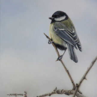 Great tit, perching, acrylic.