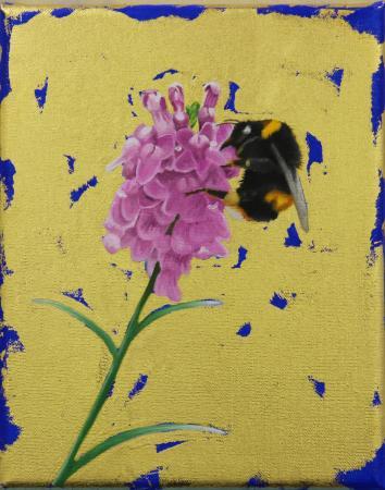 Buff-tailed-Bumblebee-on-Toadflax