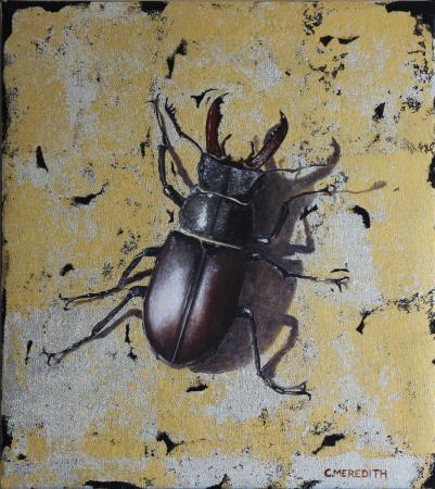 Stag-Beetle-