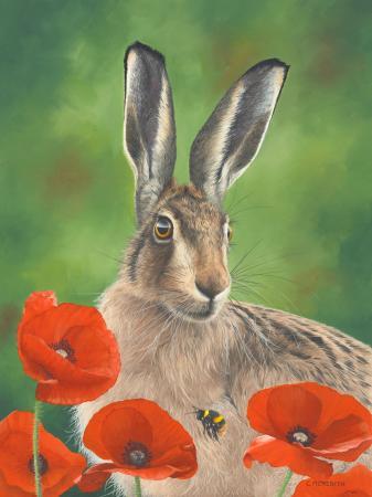 Poppyfield-Hare-