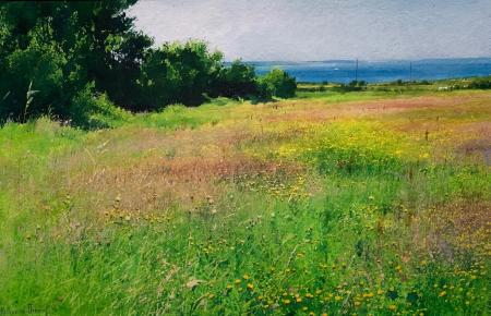 Come summer in the meadows 1