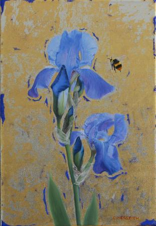 Iris Early Bumblebee
