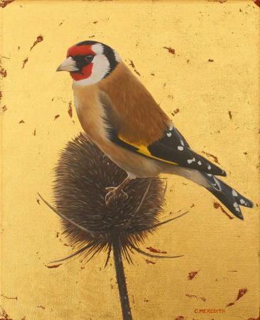 Goldfinch-&-teasel