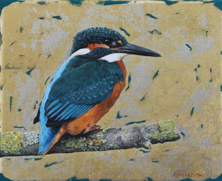 Kingfisher-study,