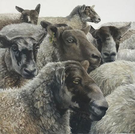 Study of sheep close up, oil on gesso