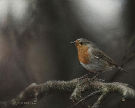 Robin perching on branch, acrylic.