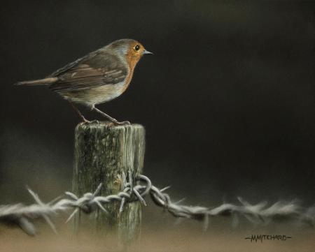 Robin perched on barbed wire fence post, acrylic.