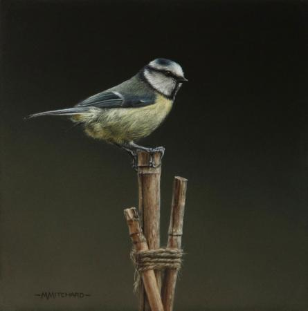 Blue tit perching on bamboo canes, acrylic.