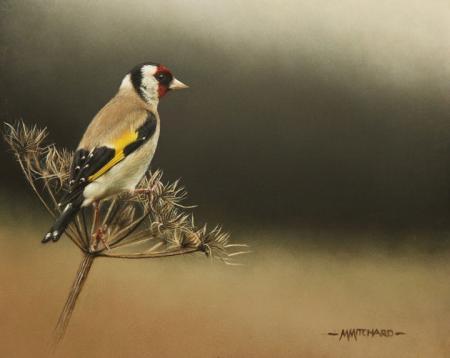Perching goldfinch, acrylic.