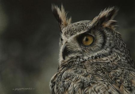 Tawny owl, acrylic.