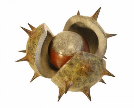 Conker in open shell, bronze.
