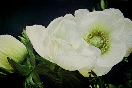 Detailed white anemones, oil.